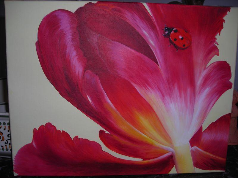 tulipe800x600.jpg
